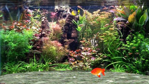 ファンタスティック水族館 3D スクリーンセーバー