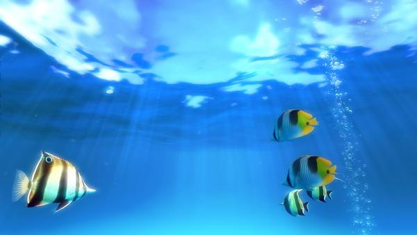 シム水族館